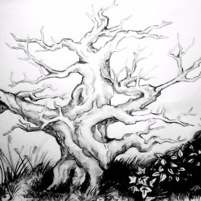 Ocracoke trees.png?ixlib=rails 1.1