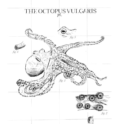 The octopus vulgaris.jpg?ixlib=rails 1.1